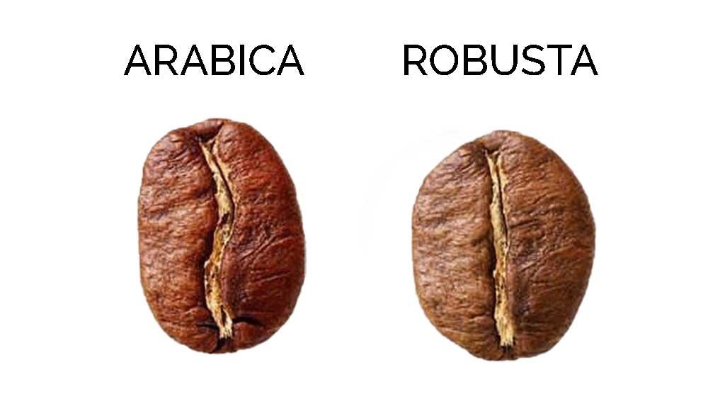 caffè arabica e robusta