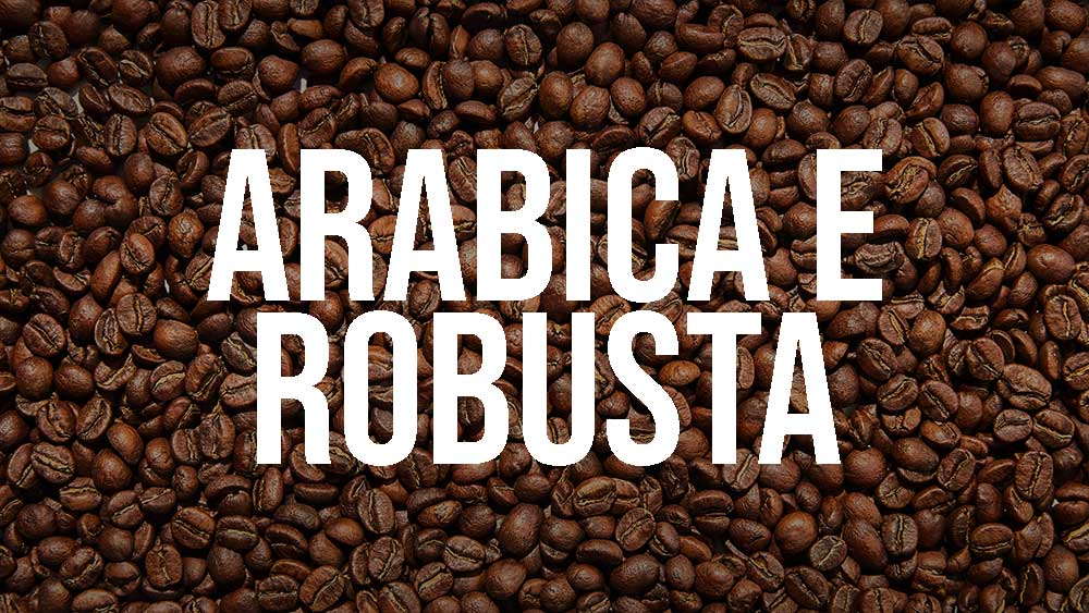 caffe arabica e robusta differenza
